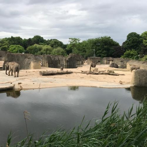 Bild 13: Großer Spielplatz im Kölner Zoo