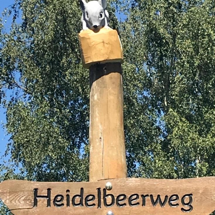 Bild 4: Heidelbeerweg