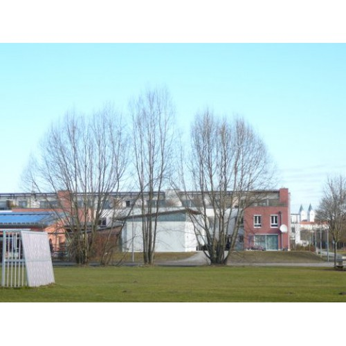 Bild 6: Isarauenpark