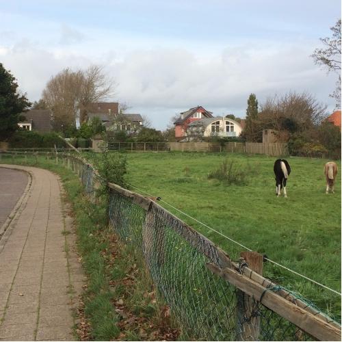 Bild 2: Neben kleiner Pferdekoppel