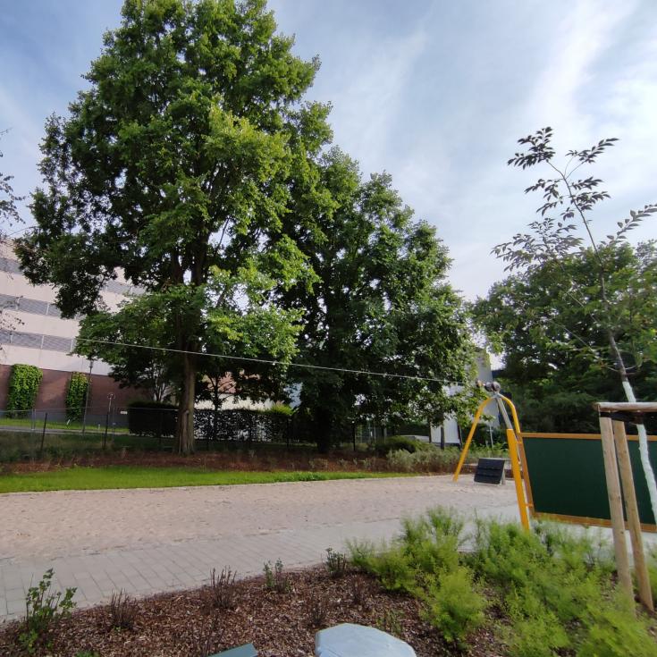 Bild 5: Spielplatz Paule-Park