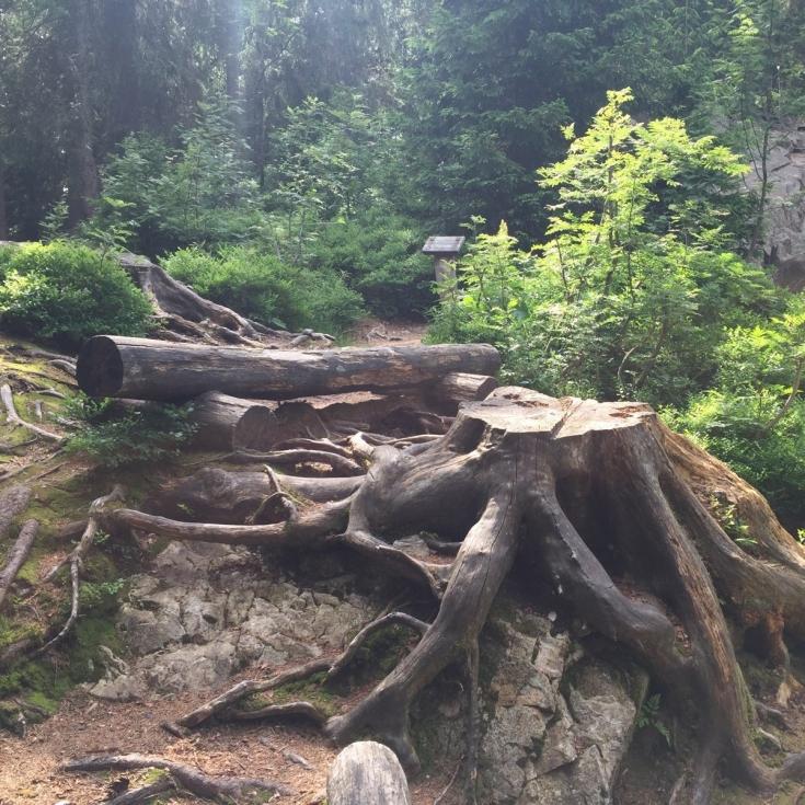 Bild 3: Waldspielplatz beim Wichtelpfad